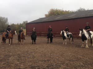 Carring Equine College Students