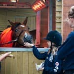 Horse Management & Care Competition & Training